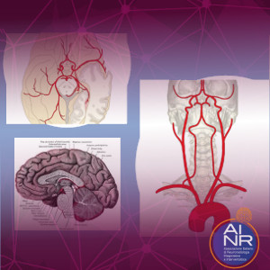 Anatomia NR